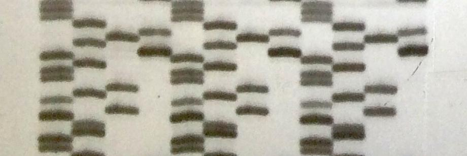 Sanger sequencing autoradiogram